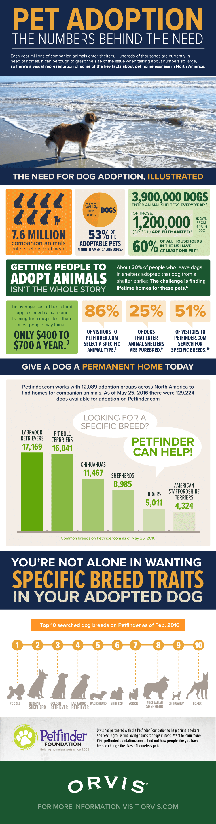 Pet Adoption The Numbers Behind the Need – Infographic Portal
