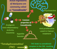 Active_Ingredients_of_Marijuana_and_their_properties