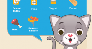 What-can-cats-eat