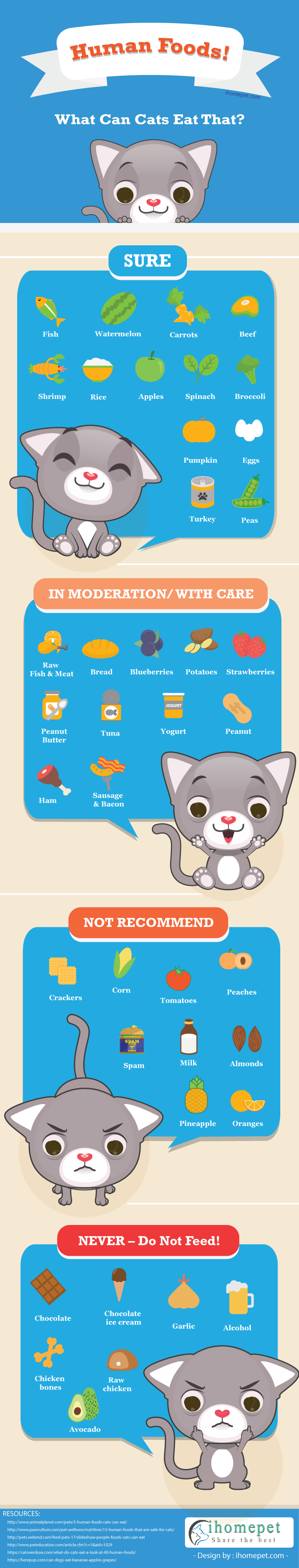 What Can I Feed A Cat Besides Cat Food