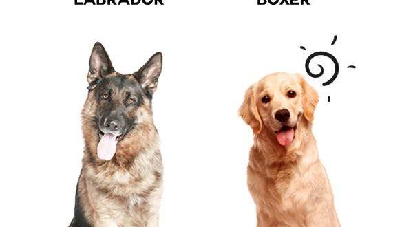 What Pet Door Size Should You Buy Infographic Portal